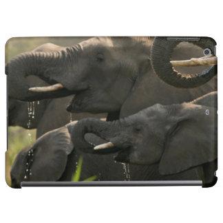 En flock av afrikanska elefanter (loxodontaen
