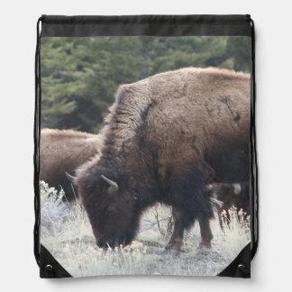 En flock av den bruna bisonen betar i en gräs- äng gympapåse