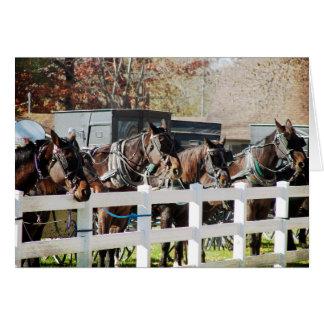 En fodra av Amish hästar Hälsningskort