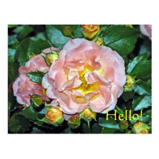 En frodig och klassikerskönhet vykort