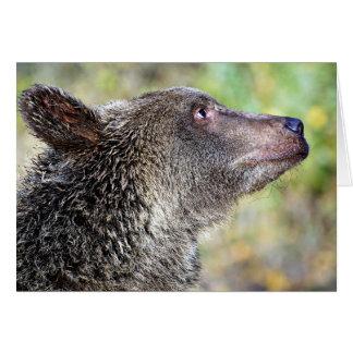 En Grizzly profilerar Hälsningskort