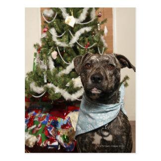 En groptjur som poserar för en julstående vykort