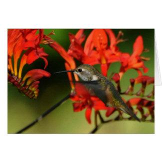 En Hummingbird på Lucifer Crocosmia Hälsningskort