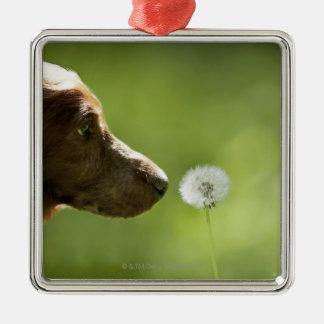 En hund och en dandelion. julgransprydnad metall