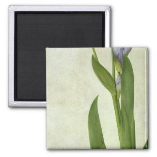 En Iris Magnet