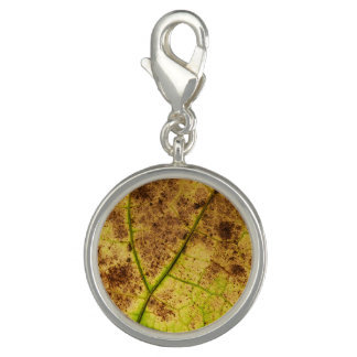 En jordnära gult och en brun lövmakro avbildar foto berlock