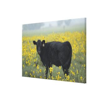En kalv amid solrosorna av Nebraska Canvastryck