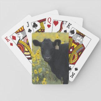 En kalv amid solrosorna av Nebraska Casinokort
