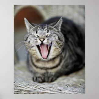 En katt som gäspar, Sweden. Affischer