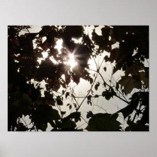 En ljuspunkt i en mörk skog poster