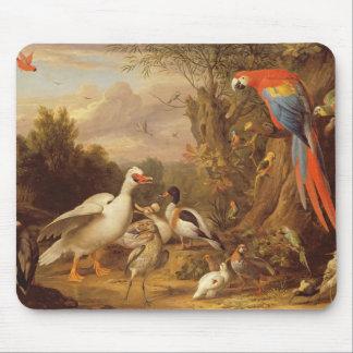 En Macaw, ankor, papegojor och andra fåglar i länd Musmatta