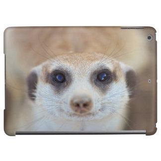 En Meerkat som tittar upp på kameran
