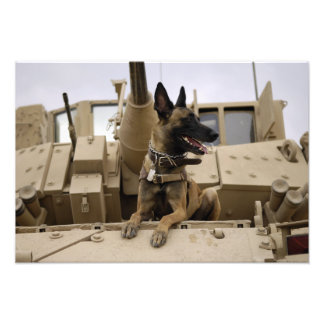 En militär funktionsduglig hund sitter på en M2A3 Foton