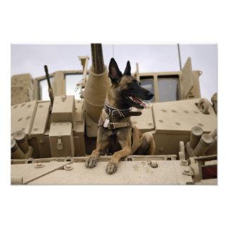 En militär funktionsduglig hund sitter på en M2A3 Fototryck
