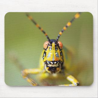 En närbild av en elegant gräshoppa musmatta
