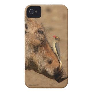 En Oxpecker på en warthogssnout, Isimangaliso, iPhone 4 Case-Mate Case
