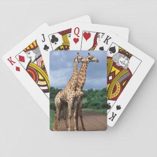 En para av giraff på vägen, Kruger medborgare Kortlek
