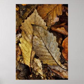 En para av stupade löv poster