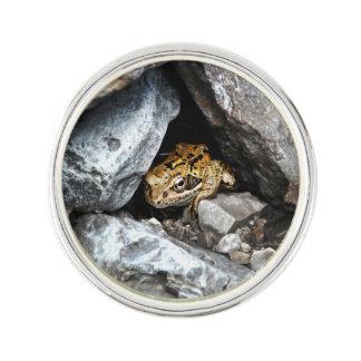 En prickig groda gömmer bland stenarna i en gård kavajnål