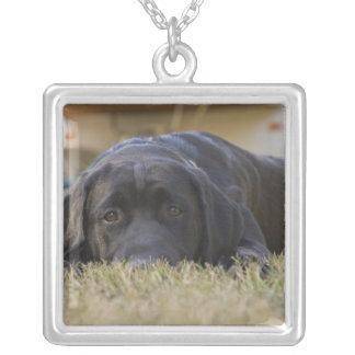 En puppy. för Labrador Retriever Silverpläterat Halsband