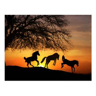 En rolig vykort med hästar!