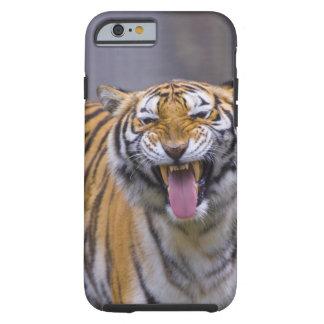 En ryta tiger, Taiwan, Taipei, Taipei Zoo Tough iPhone 6 Skal