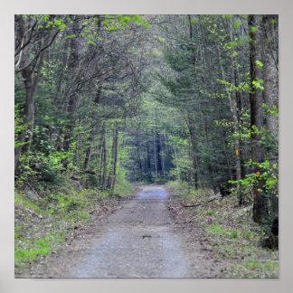 En skogsbevuxen väg poster