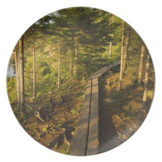 En träwalkway i Acadianationalparken Maine Tallrik