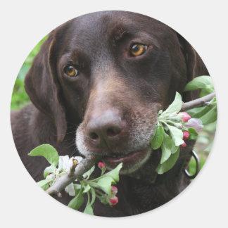 En tysk Shorthaired pekarehund med blommor Runt Klistermärke