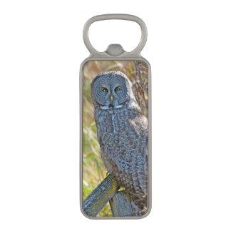 En underbar grå färg Owl1 för juvenal Magnet Kapsylöppnare