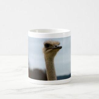 Enfaldigt foto för djurliv för ansikte för Ostrich Kaffemugg