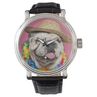 Engelsk bulldogg (18 gammala månader) som ha på armbandsur