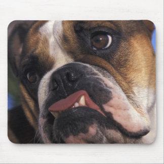 Engelsk bulldogg musmatta