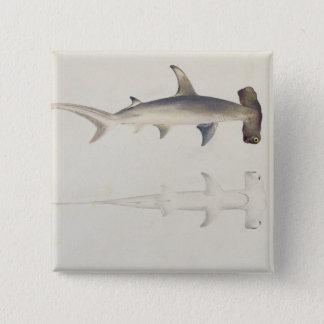 Enhövdad haj, Loheia som tillskrivas förr Standard Kanpp Fyrkantig 5.1 Cm