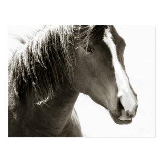 Enkelt svartvitt slut upp hästvykort vykort