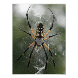 Enorm spindel/gult- & svartArgiope Fototryck
