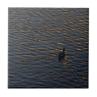 Ensam ankasimning på sjön på solnedgången Time Kakelplatta