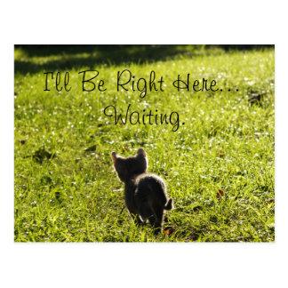 "Ensam kattunge ""saknad dig"" vykort"