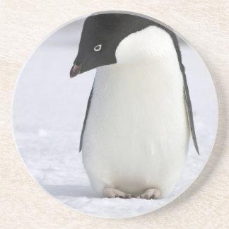 Ensam pingvinkustfartyg glasunderlägg i sandsten