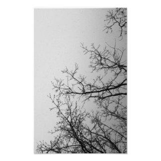 Entwined himmel & träd fotografier