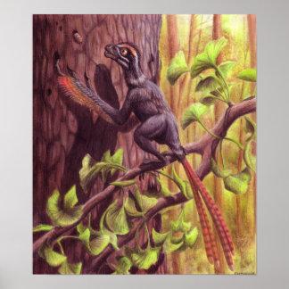 Epidexipteryx tryck