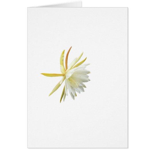 Epiphyllumhybrid Calisto Hälsningskort