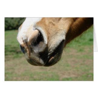 Equine näsa hälsningskort