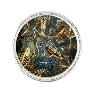 Ernst Haeckel amfibiegrodor och ödlor Kavajnål