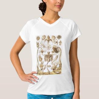 Ernst Haeckel biologiteckningar T Shirt