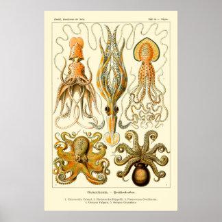 Ernst Haeckel bläckfiskaffisch Poster