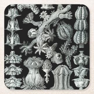 Ernst Haeckel Gorgonida korall Underlägg Papper Kvadrat