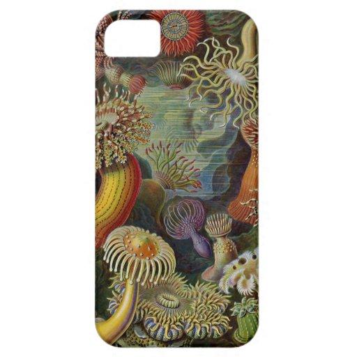 Ernst Haeckel havsanemoner iPhone 5 Skydd