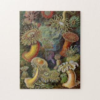 Ernst Haeckel havsanemoner Foto Pussel