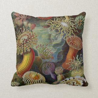 Ernst Haeckel havsanemoner Kudde